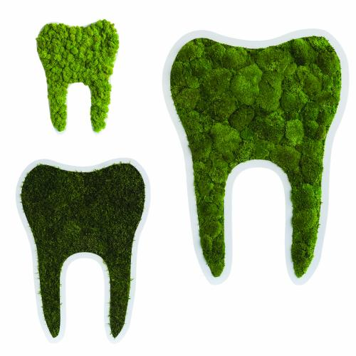 Zahnbilder