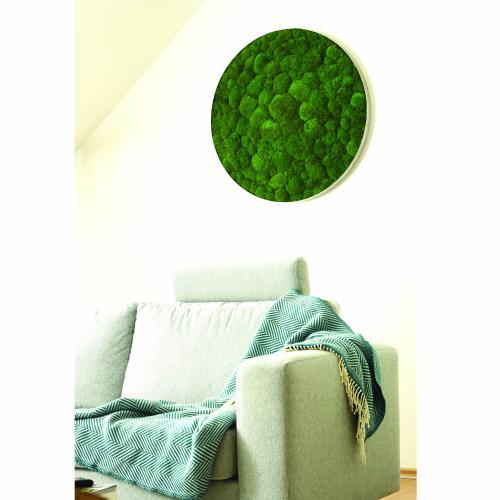 Kugelmoosbild ellipsoid 2